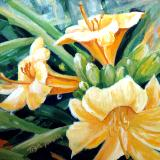 Lilies by day