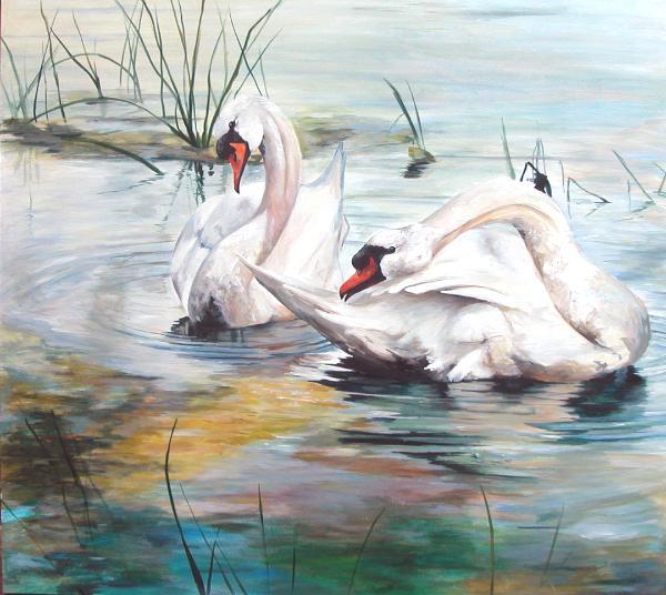 Evening preening      (Swans on the Rideau River Ottawa)