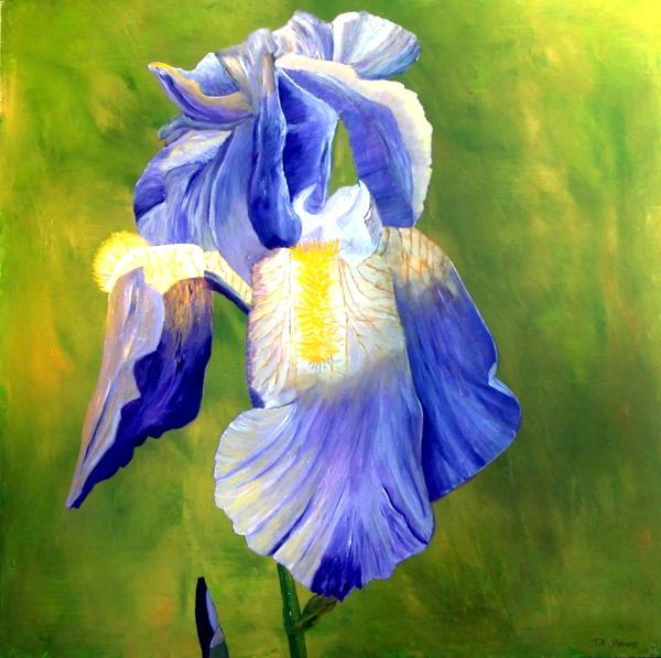 Eleanors Iris